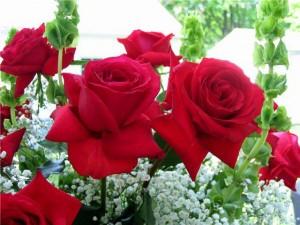 rosa vermelha 2