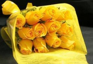 rosas amarelas (1)