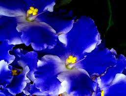 violeta azul